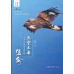 天空王者--飞过北京上空的猛禽/自然之友书系