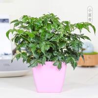 花卉盆栽发财树绿萝多肉植物新手植物盆栽 室内水培绿植 ju5