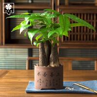 发财树盆栽植物室内小盆景四季常青绿植客厅办公室桌面花卉招财树