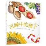 台版 黛安娜.哈茨《沉睡中的种子》 种子插画识别 平面设计书籍