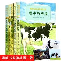 黑鹤亲近大自然动物小说全5册 喝牛奶的猪/乌尔逊河边的狼/母兔/呼和诺尔野猫 三四五六年级小学生课外