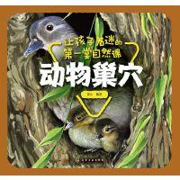 让孩子着迷的第一堂自然课-动物巢穴