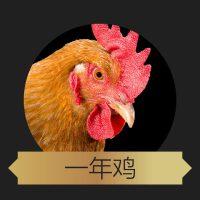 【酷菜】北京 正宗散养油鸡 鸡龄1年