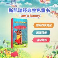#小豆豆英文童书 I Am a Bunny 我是一只小兔子 英文原版绘本 Little Golden Book金色童书