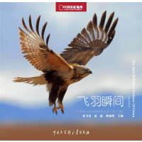 中国国家地理野生鸟类摄影大赛:飞羽瞬间(第二卷)