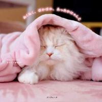 现货【深图日文】ぬくぬく、ぽかぽか、あったかにゃんこ 猫咪摄影集 Mac Marron/著 萌宠写真 日本原装进口 正版