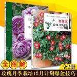 正版玫瑰月季栽培12月计划+全图解玫瑰月季爆盆技巧(共2册)