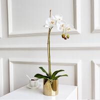 蝴蝶兰仿真花客厅摆设手感保湿北欧花艺套装小盆栽摆件装饰假花 白色 1杈套装