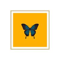 现代简约装饰画儿童房正方形蝴蝶挂画床头画客厅沙发背景墙画壁画 80*80 浅木纹油画框 单幅价格,多幅请分别加入