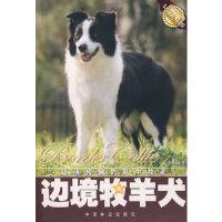 【新书店正版】边境牧羊犬 文俸勇著 中国林业出版社 9787503841644