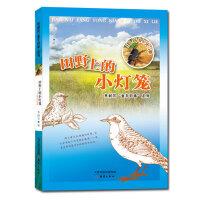 """焦耐芳""""童年旧事""""系列 田野上的小灯笼――虫鸟的光泽"""