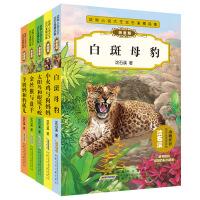 沈石溪动物小说全集 全套系列的书 5册注音版 拼音版 太阳鸟和眼镜王蛇 小火鸡与狗妈妈 *与* 羊奶妈和豹孤儿儿童文学