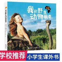 我的野生动物朋友 原云南教育出版社 现改为接力出版社 请慎重下单 人与自然科学少儿科普图书8-9-10-11-12岁儿