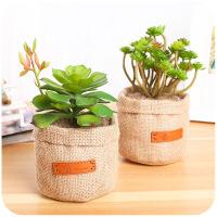 创意多肉仿真植物竹炭包居家摆件除味除甲醛桌面活性炭包