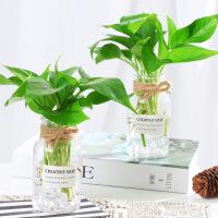 新创意花瓶小清新水培容器风信子萝水养植物玻璃瓶透明插花器皿 中等