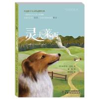 打动孩子心灵的动物经典 灵犬莱西 图书中国少年儿童出版社 6-8-10-12岁青少年儿童文学书籍 小学生四五六年级