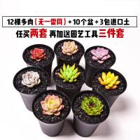 【支持礼品卡】植物花卉含盆带土多肉植物多肉植物组合套餐新手盆栽肉肉 jv3