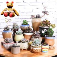 【支持礼品卡】多肉花盆陶瓷批发植物紫砂粗陶绿植物塑料简约个性创意小盆栽jw0