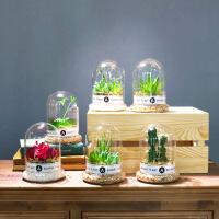 物有物语 仿真绿植 北欧原创多肉永生花艺玻璃罩工艺品 仿真多肉植物假绿植摆件